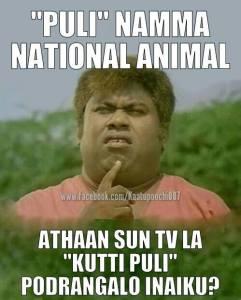 senthil - pulli namma national animal - athaan sun tv'la kutti ouli