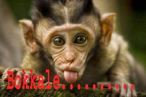 Bokkale Telugu Comment Pic