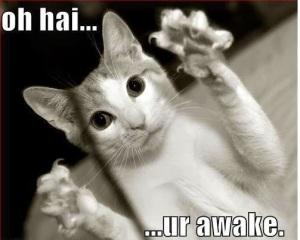 Oh Hai Ur Awake