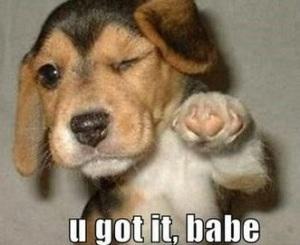 Cute dog u got it babe