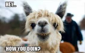 Hey how you doin
