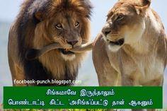 Lions love scene super punch dialogue fb comment pic