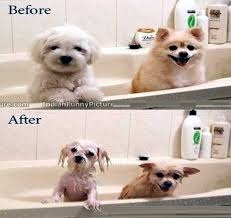 Dog Bath Before And After Funny Pictures