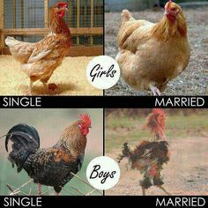 Boneless Chicken Joke Fb Photo Pic