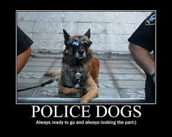 Police Dogs Fb Funny Pic