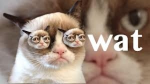 Funny Angry Grumpy Cat Asks What