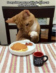 Funny Cat Eating Breakfast