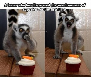 Funny Animals Love Cupcakes