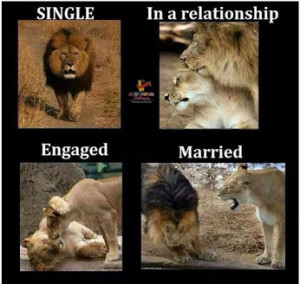 Tiger Marriage Funny Pic