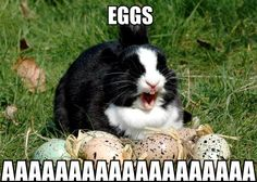Eggs AAAAAAA English Funny Comment