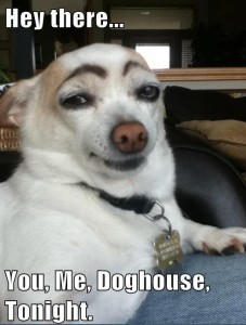 Hey There.... Yu Me Doghouse Tonight