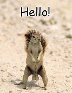 Hello! Funny Animal Pic