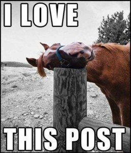 Funny Happy Horse Laughing Love This Post Pics