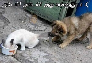 Tamil Funny Pictures Cat & Dog Fight