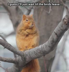 I Guess I'll Just Wait Til The Birds Leave....