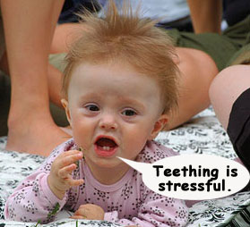 Teething Is Stressful Funny Baby Pic