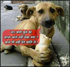 Funny Dog Hindi Comment Images