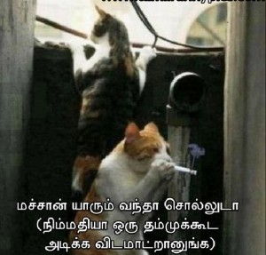 Tamil Funny Pictures Cat Smoking