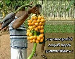 Vazha Kula Chadichu Funny Photo Pic
