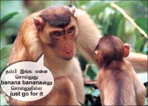 Thambi Inga Enna Solluthu Funny Animal Pic