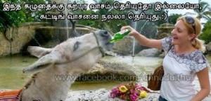 Funny Donkey Having Beer