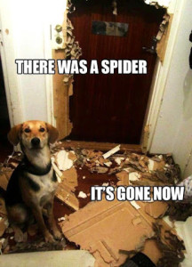There Was A Spider It's Gone Now