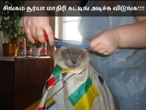 Monkey Hair Cutting Tamil Funny Pics