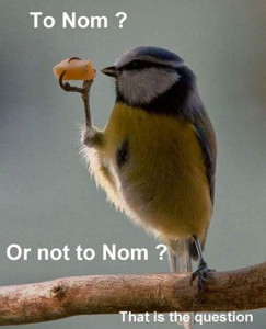 Funny Animal Photos Captions