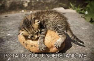 Cat-Potato You Understand Me
