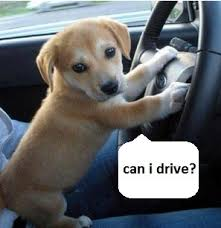 Can I Drive Funny Dog Pic
