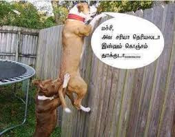 Funny Animals With Sayings In Tamil