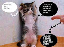 It Get Him Later Hehehe Funny Cat Pic