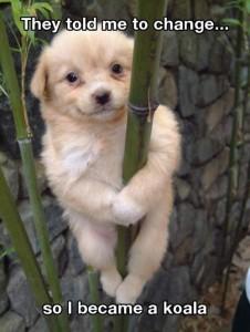 Cute Pet Funny Animals Koala