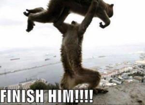 Finish Him!!!! Funny Animal Pic