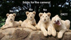 Funny Cute Smile Animal