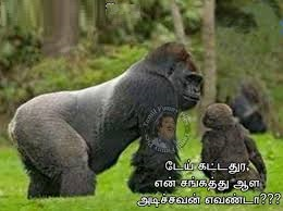 Monkeys Funny Pictures In Tamil
