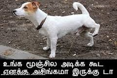 Funny Dog Comment Pic