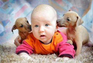Funny Baby And Dog Comment Pic