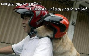 Funny Dog With Helmet
