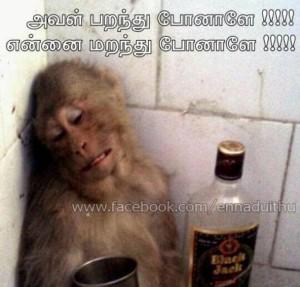 Monkey Feeling Comment