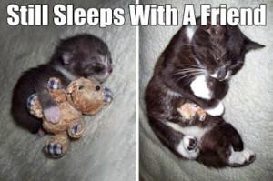 Pets Still Sleeps With A Friend