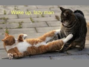 Funny Animals Wake Up Lazy Man