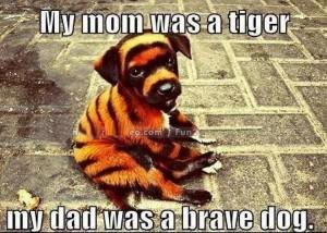 Tiger Dog Meme Funny