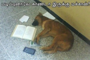 Dog Studying Funny Pic