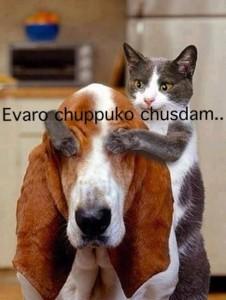 Evaro Chuppuko Chusdam...