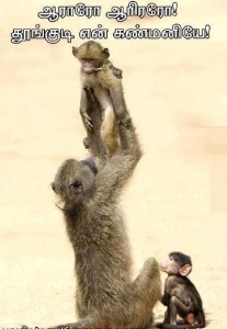 Monkey Family Funny Pic