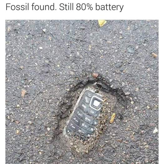 fb funny fossil found