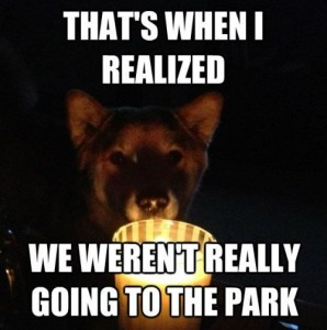 When I Realized Werent Going To The Park